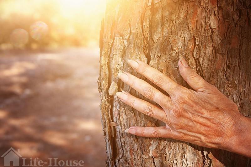 рука пожилой женщины на фоне коры дерева